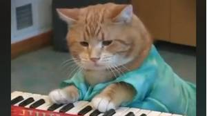 Bento, el famoso 'keyboard cat'.